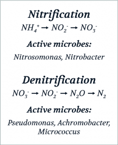 Nitrification and denitrification process